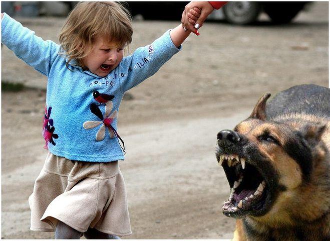 Когда запретят домашних животных?