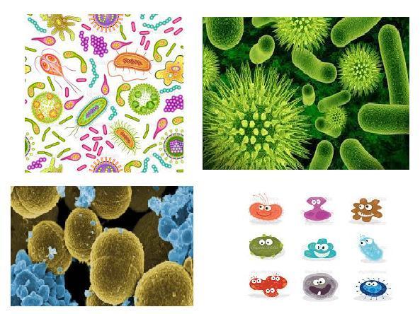 бактерия вирус и микроб