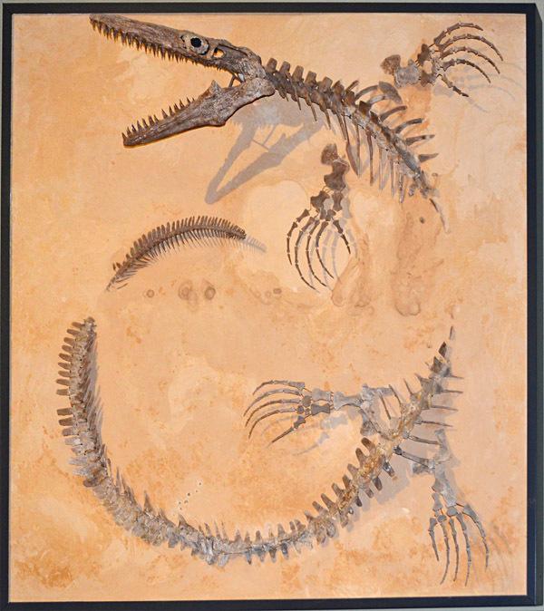 ихтиозавр, скелет, морское дно, палеонтология, ящер