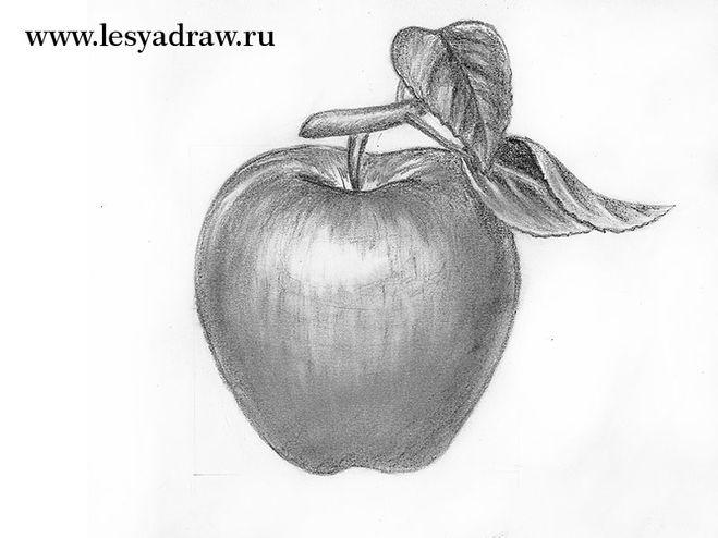 Фото яблока в разрезе