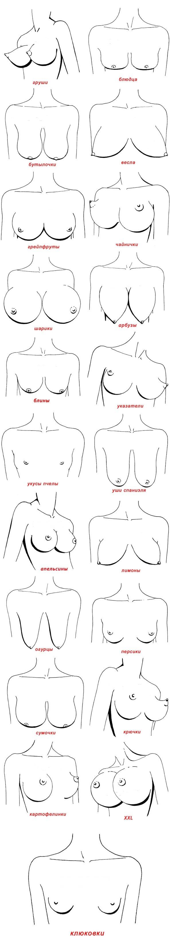 Типы женской груди фотографии 2 фотография