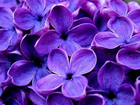 картинки цвета красивые
