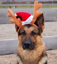 костюм для собаки на Новый год