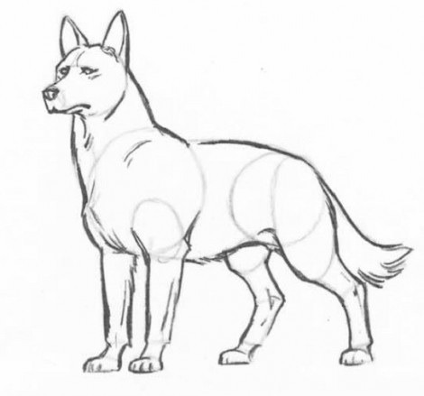 Как нарисовать карандашом поэтапно взрослого волка? Рисунки Карандашом для Начинающих Про Любовь Поэтапно