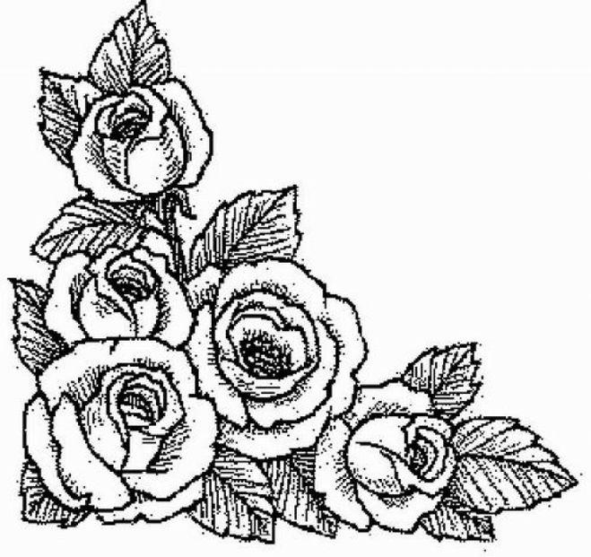 Цветы карандашом раскраска