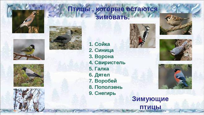 Почему птицы зимующие остаются зимовать