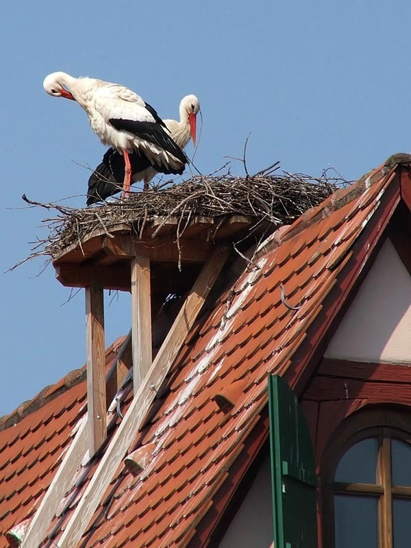 Фото как сделать гнездо для аиста своими руками
