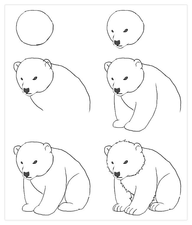 как нарисовать белого медведя поэтапно