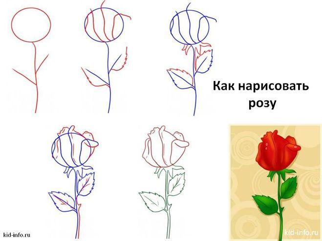 Нарисовать розу можно