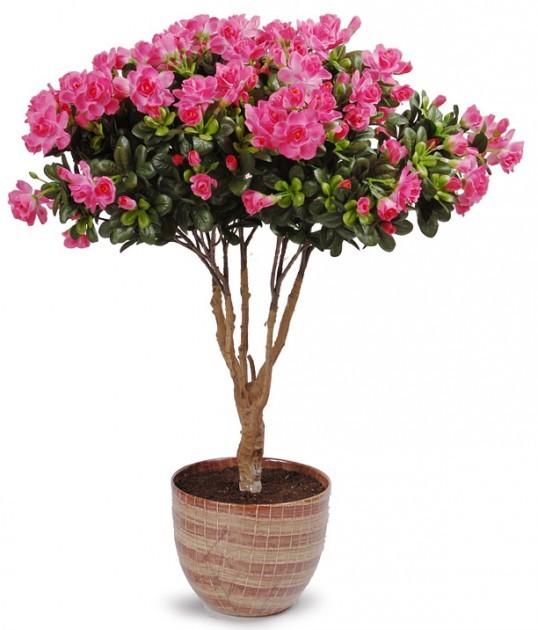 Дешевые цветы 8 марта