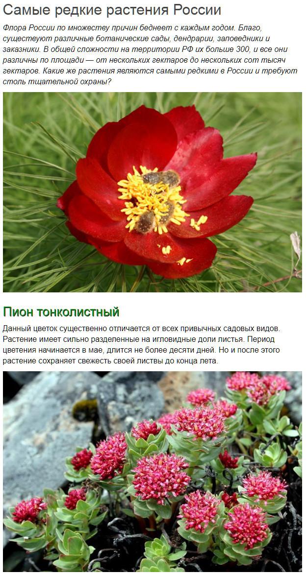 Доклад на тему редкие растения 1105