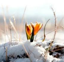 Как оригинально, смешно подписать фото, селфи на первый день весны?