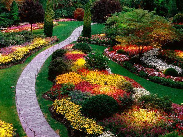 Цветы вдоль тропинки 3