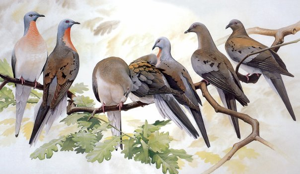 Песня летите голуби скачать