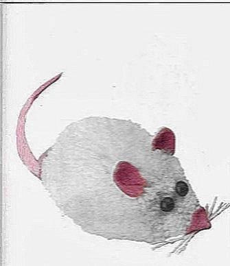 как сделать мышь крысу