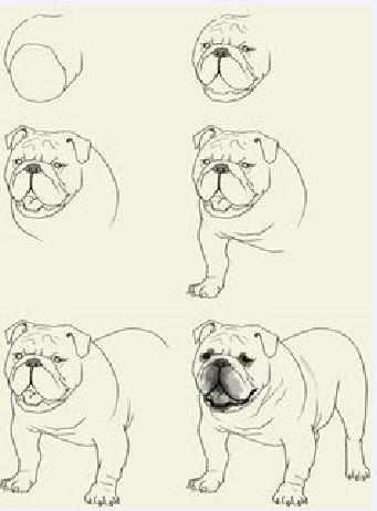 Как нарисовать французского бульдога