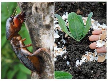 Размеры насекомых вредителей.