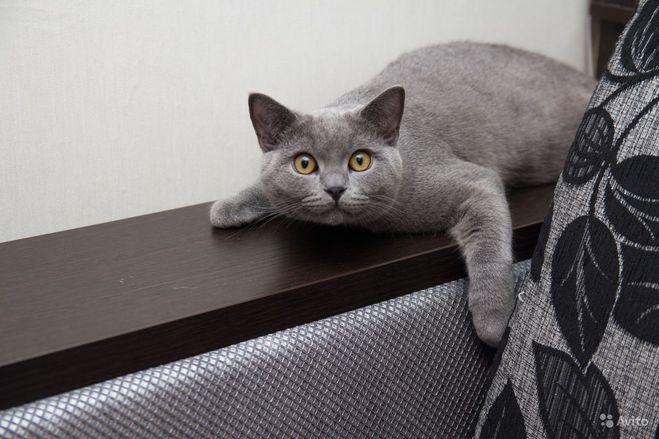 Кот стал гадить в квартире