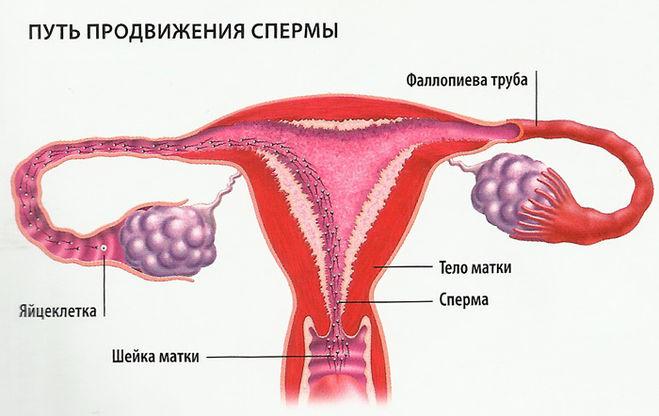 Контрацепция или как не забеременеть от минета