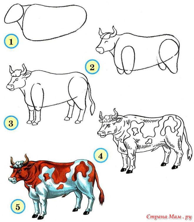 - Comment dessiner des animaux ...