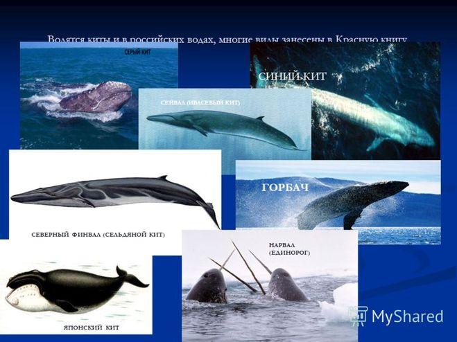кит красной фото книги из серый