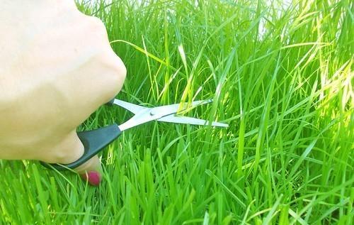 Скашивание трав поддерживает внешний вид газона, а также является прекрасным средством борьбы с сорняками