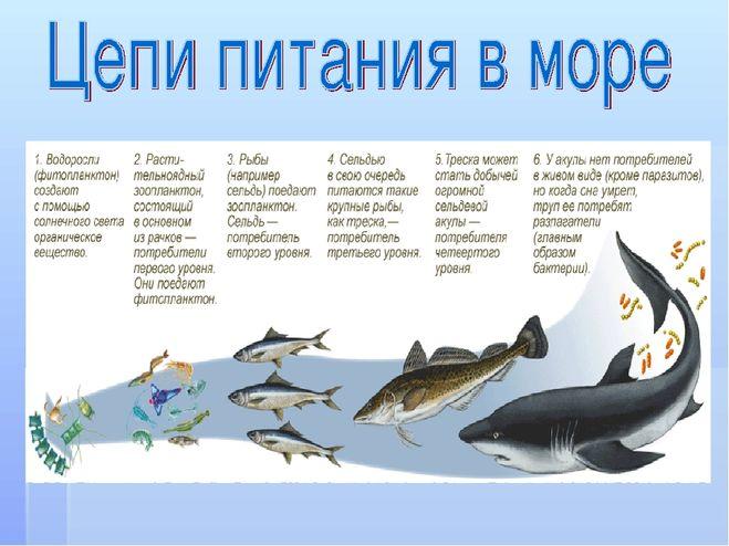 Схема цепи питания для черноморского побережья кавказа фото 719