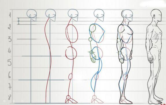 Как рисовать человека поэтапно с пропорциями
