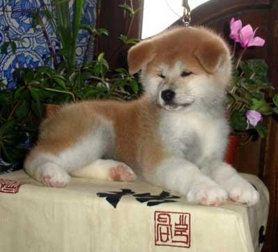 Как зовут собаку Путина? Какой породы собака у Путина?