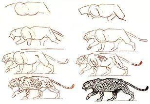 Как нарисовать леопарда карандашом поэтапно?