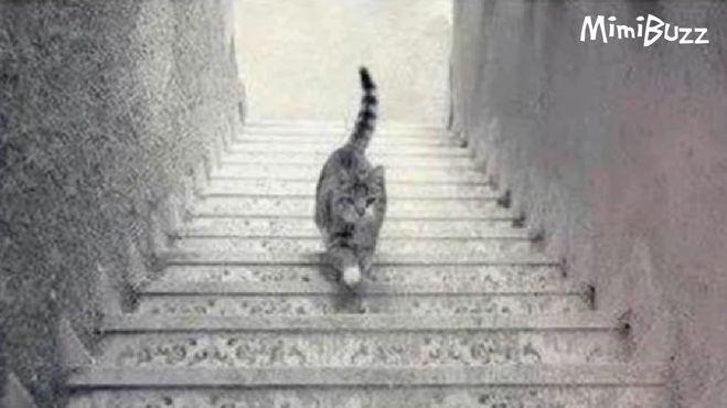 кошка спускается по лестнице