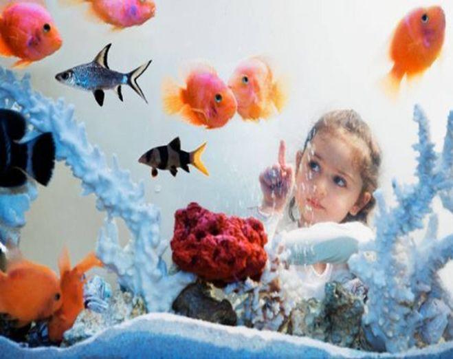 Cjxbytybt ghj домашних рыбок 3 класс