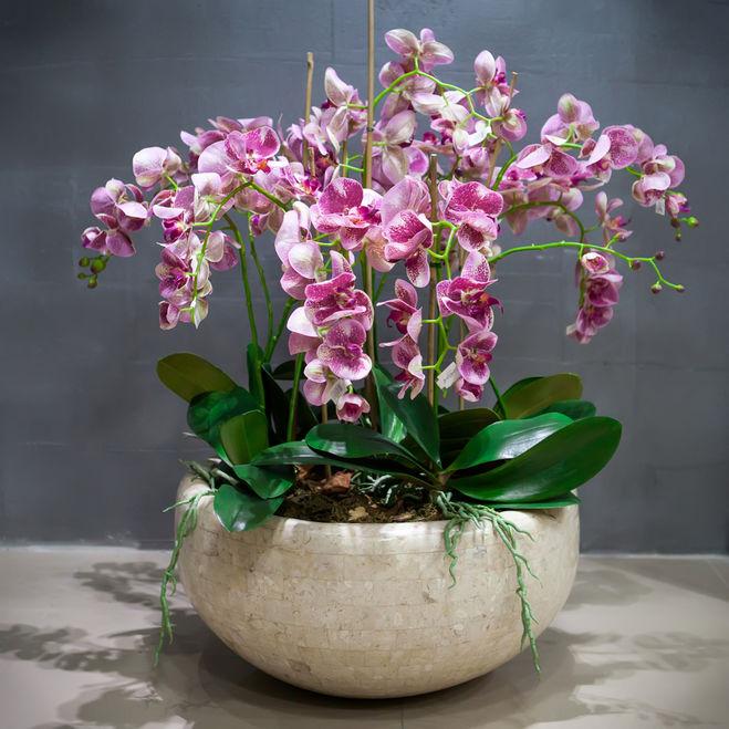 Какие горшки для орхидей нужны, как правильно выбрать емкость 38