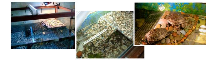 Островок для красноухой черепахи своими руками из подручных материалов фото 36