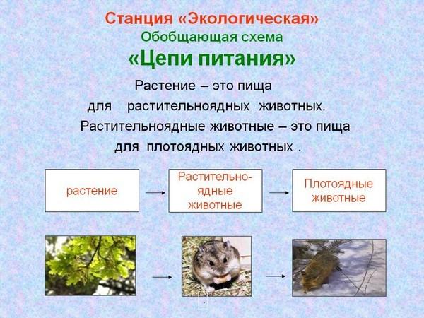 при каких условиях воздействие хищника может приводить