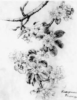 Дачные цветы похожи