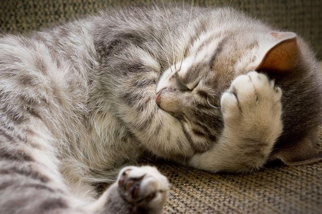 На сколько дней можно оставлять дома кота одного