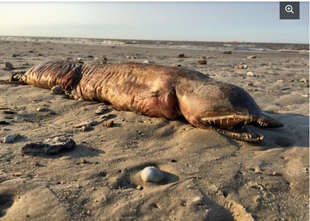 """Ураган """"Харви"""" выбросил на берег загадочное морское существо"""