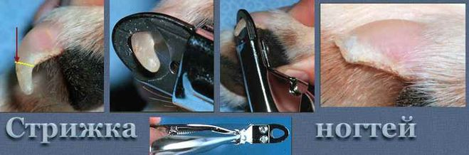 Как обрезать когти котёнку в домашних условиях 180