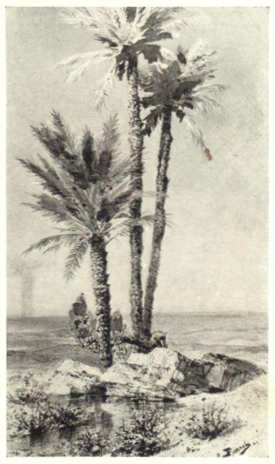 Как вы думаете почему погибли три пальмы