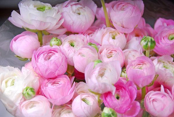 Картинки розы садовые