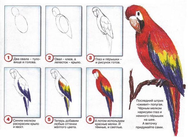 Как нарисовать попугая карандашом поэтапно