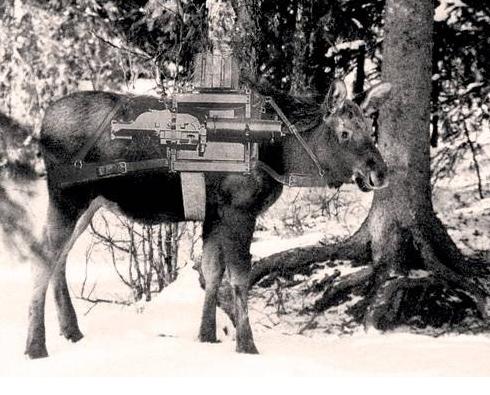 интересные факты о животных лесных зон 4 класс
