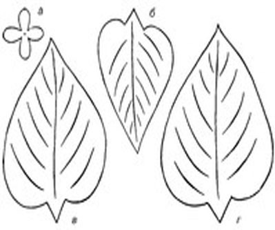 Цветы из бумаги схемы шаблоны сирень