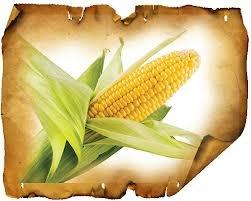 сахарная кукуруза 4 буквы ответ