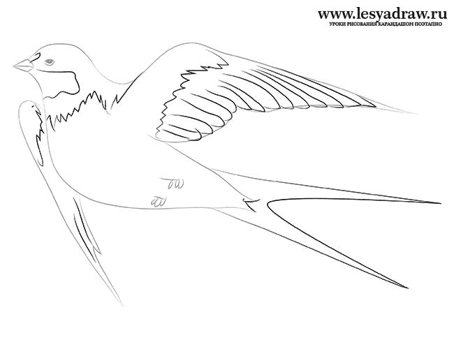 Как нарисовать ласточку карандашом поэтапно