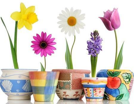 Лунный календарь цветовода на 2017 год (пересадка комнатных растений)?