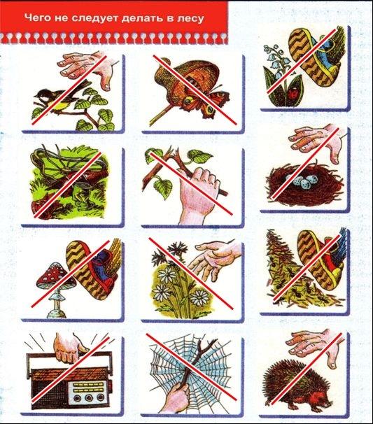 Запрещающие знаки поведения в лесу в картинках обучение в кургане рабочим специальностям