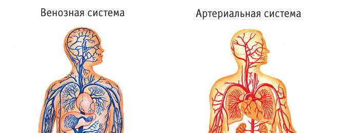 http://cdn01.ru/files/users/images/9a/7d/9a7d5708a2bd33a54e0094044f0b2591.jpg