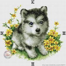 Вышивка собак хасок